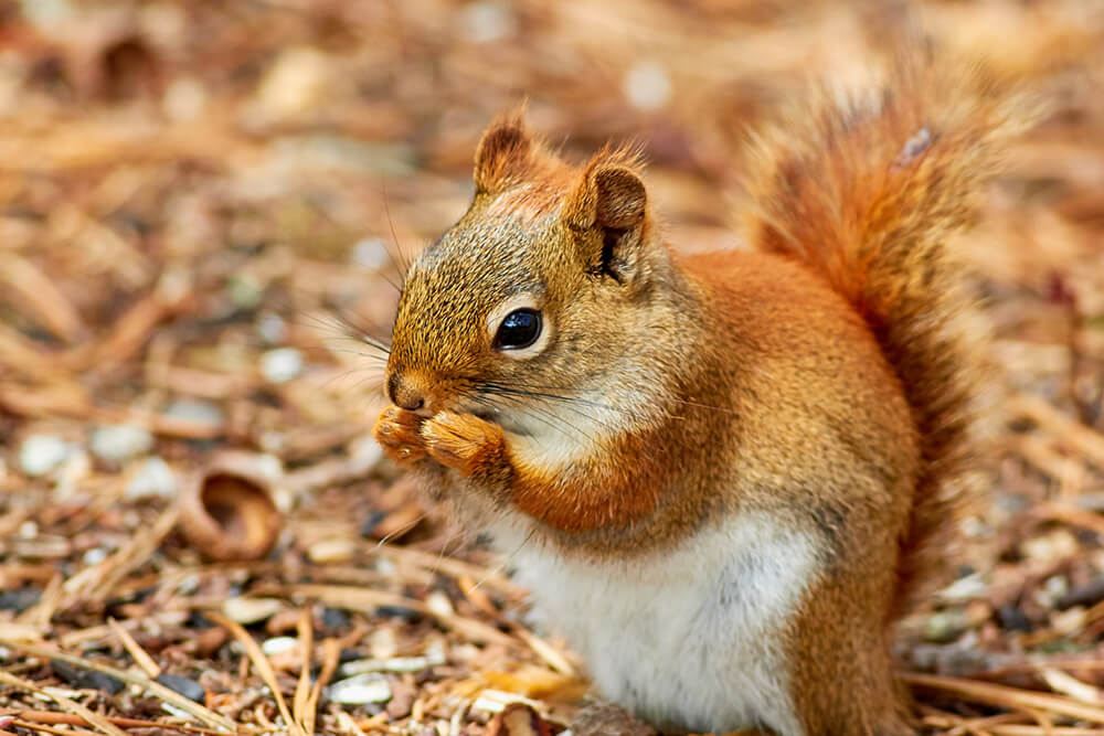 The Best Food To Feed A Baby Squirrel Fauna Feeders